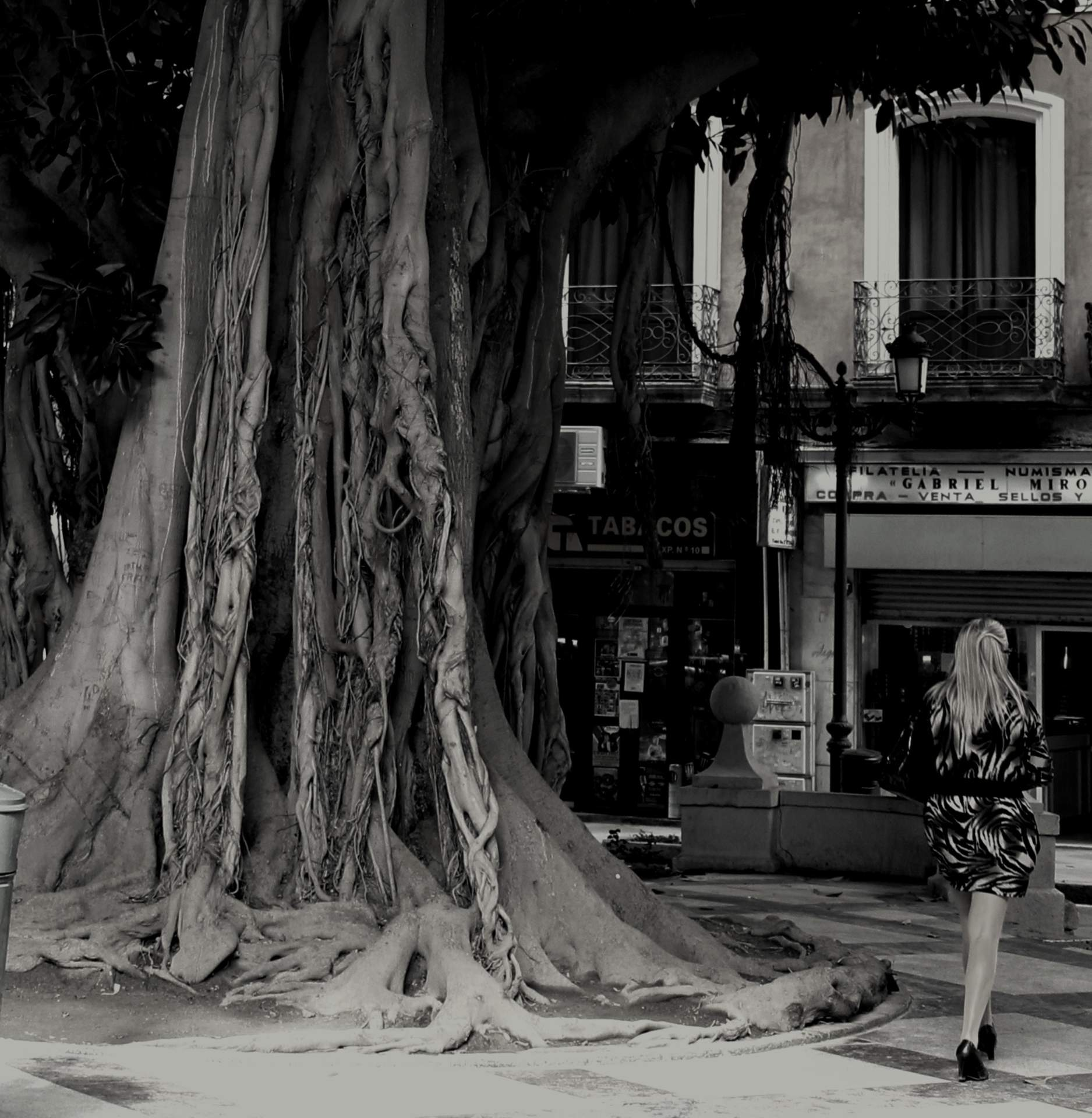 Tree in Costa Blanca
