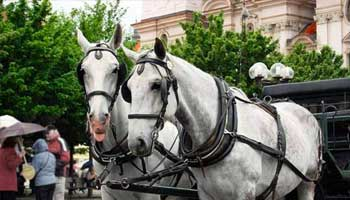 Horse and carriage ride - Málaga